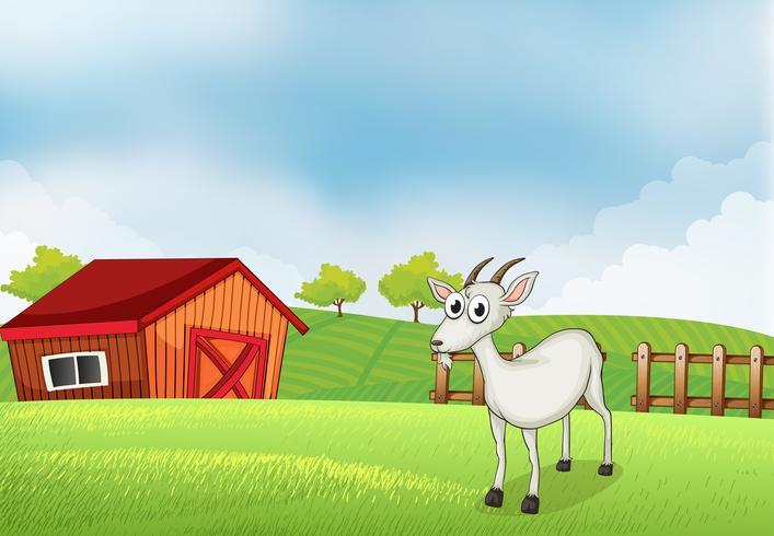 A white goat at the farm
