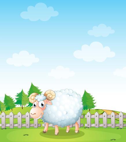 Una oveja dentro de la cerca.