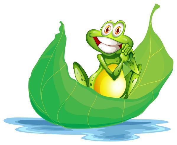 Una rana sorridente sulla grande foglia