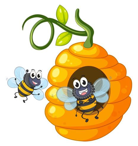 Dois, abelhas, voando, ao redor, colmeia