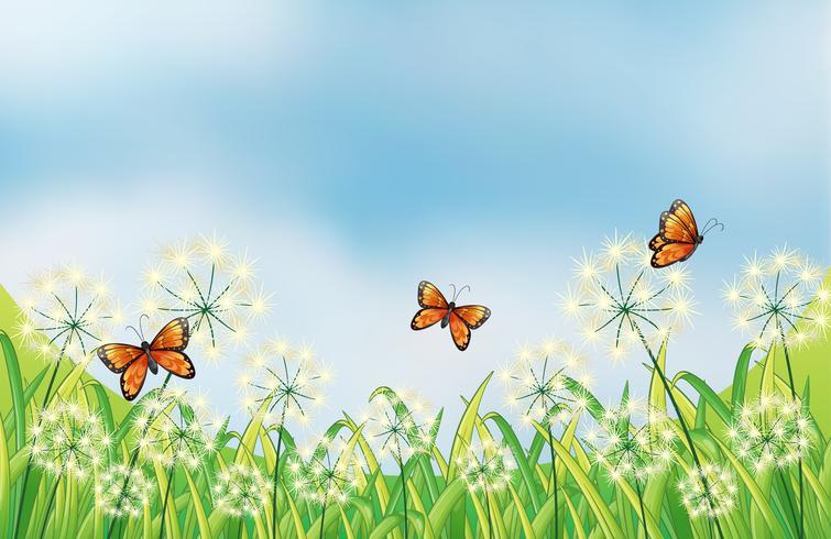 Orange butterflies vector
