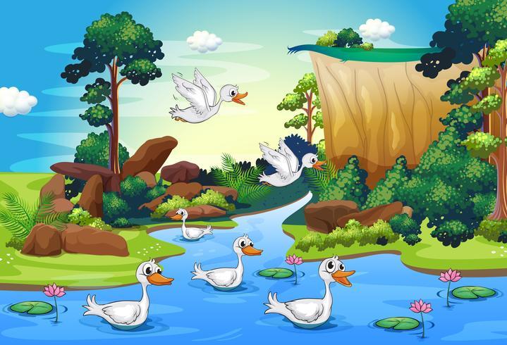 Un grupo de patos en el río en el bosque.