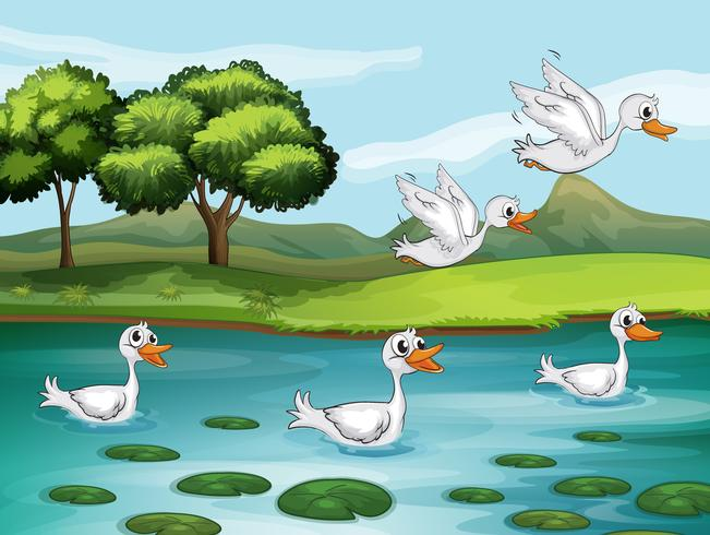 Ducks and water vector