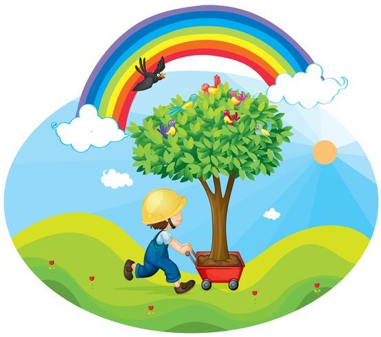 menino carregando árvore em um carrinho