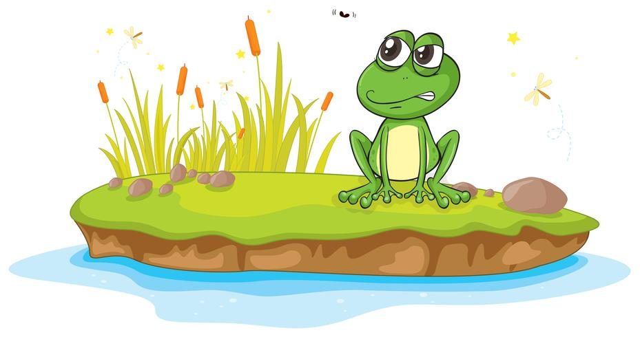 a frog and a water vector
