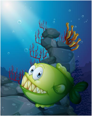 Eine große Piranha unter dem Meer in der Nähe der Felsen