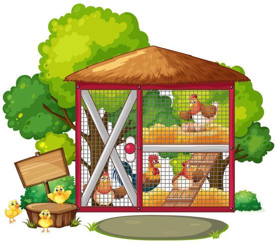 Polli in grande pollaio vettore