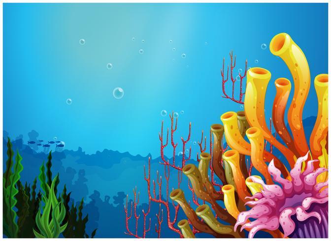 Una bella vista sotto il mare