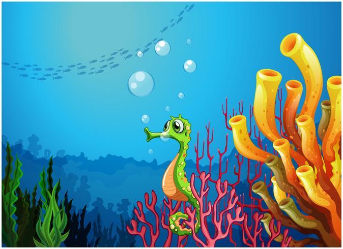 A seahorse near the coral reefs