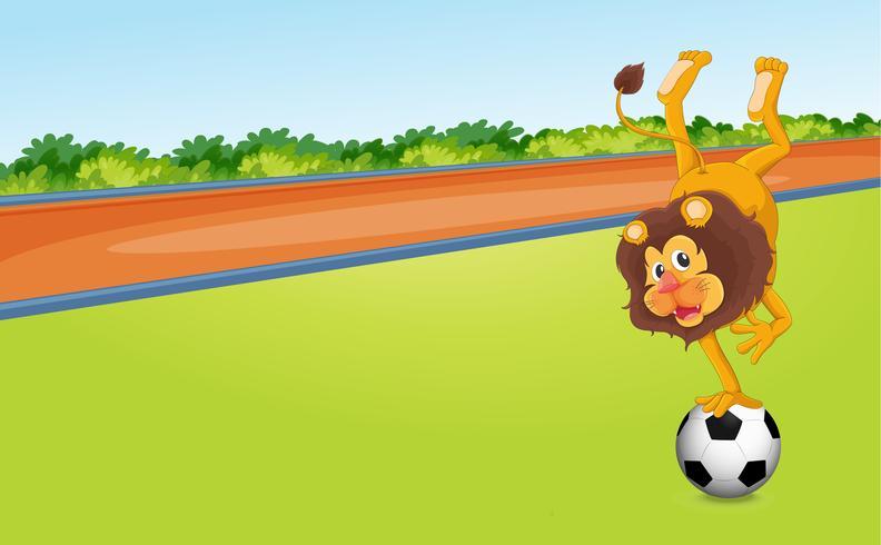 en lejon och en boll