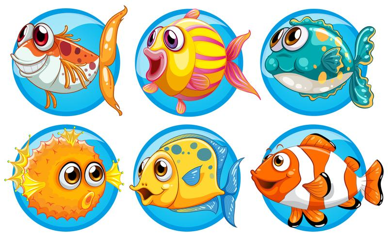 Different Kinds Of Fish On Round Badge Download Free Vectors Clipart Graphics Vector Art