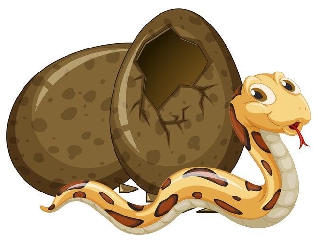 Uovo da cova di serpente marrone
