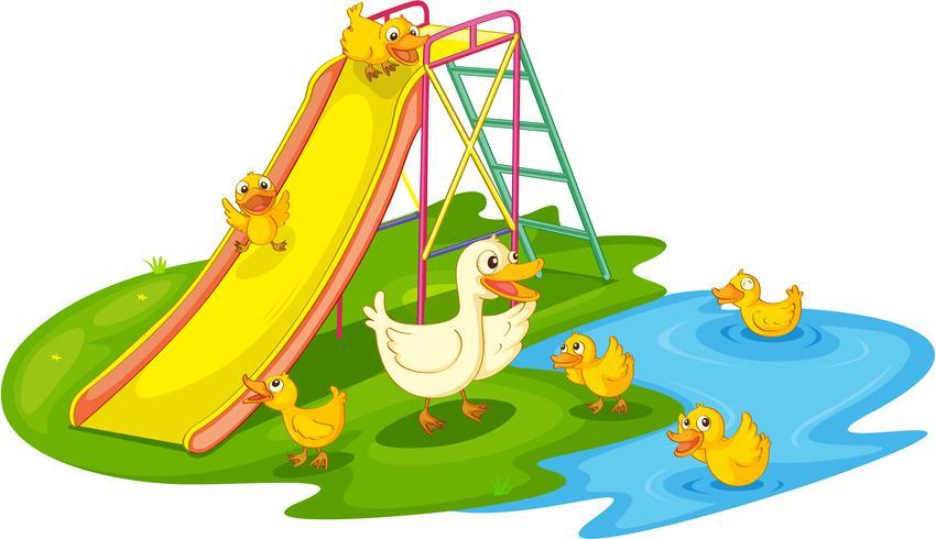 Patos em um parque