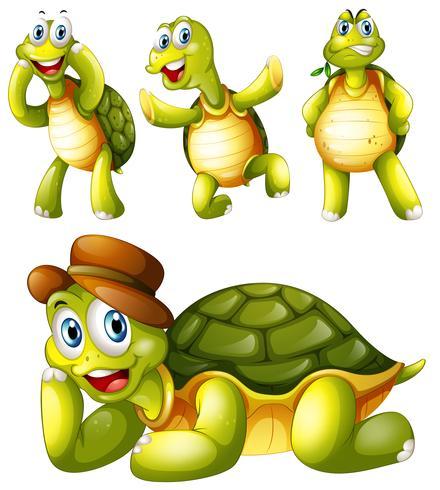 Quatre tortues espiègles