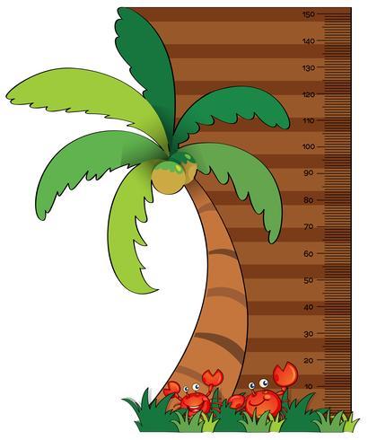 tabella di misurazione dell'altezza con albero di cocco