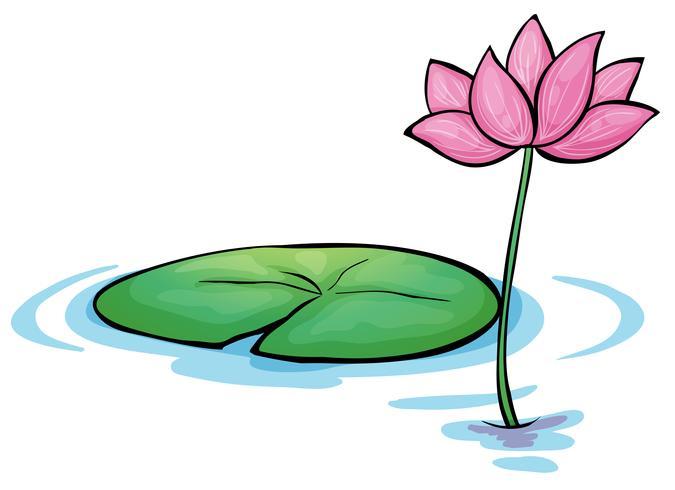 Een waterleliebloem