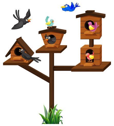 Différents types d'oiseaux dans la cage à oiseaux