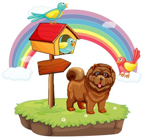 Cane e arcobaleno