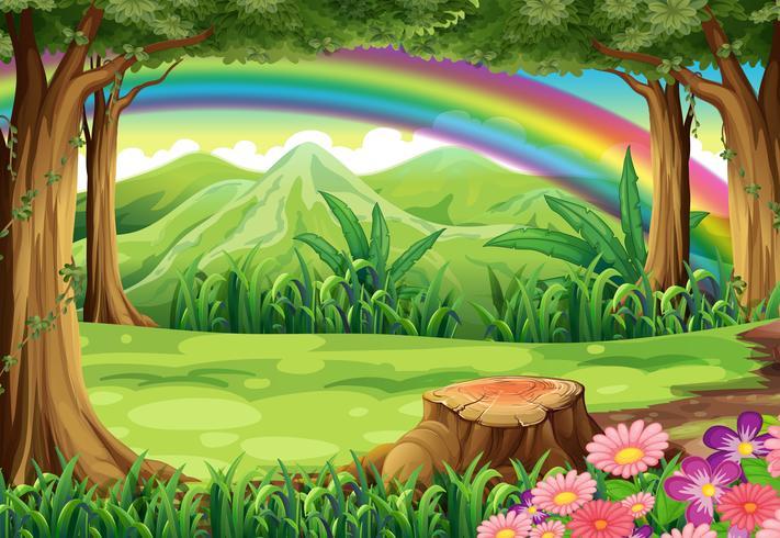 Un arcoiris y un bosque