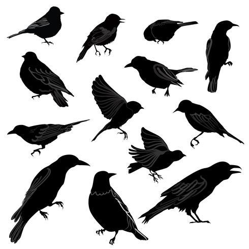 Conjunto de diferentes siluetas de aves silvestres.