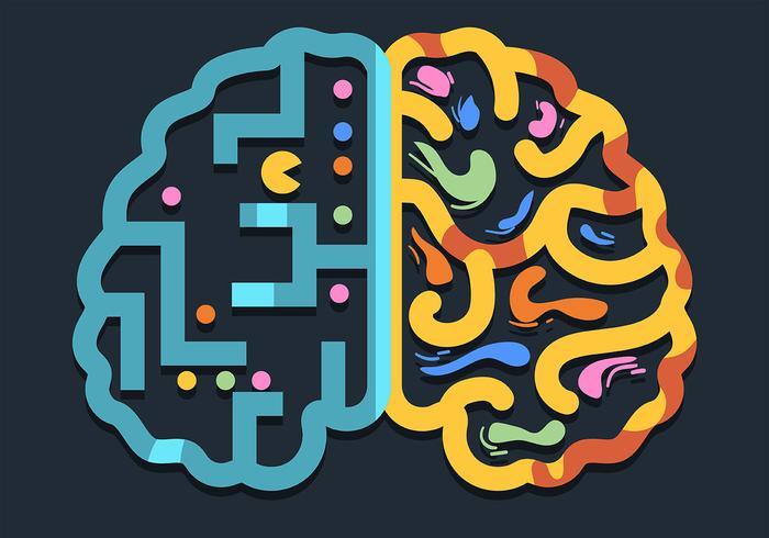 Cerveau humain hémisphère gauche et droite