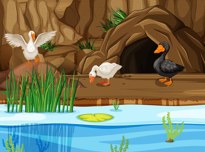 patos en escena de la cueva
