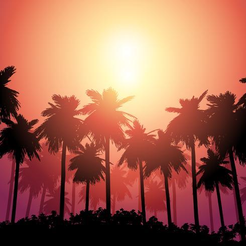 Palmeira paisagem contra o céu do sol