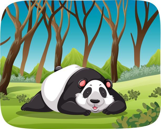 Panda in Waldszene