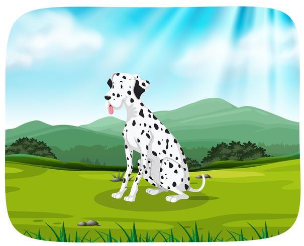 Dalmatian on nature scene