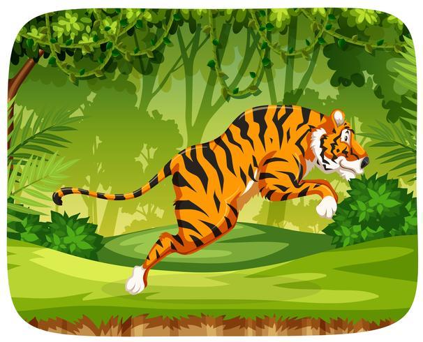 Un tigre sautant en forêt