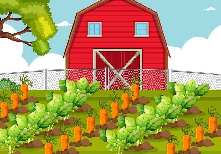 Légume dans une ferme