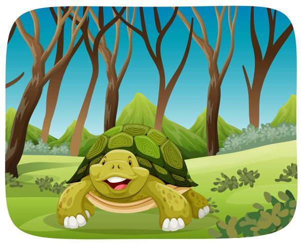 süße Schildkröte im Wald