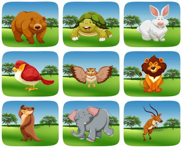 Set Tiere in der Naturszene