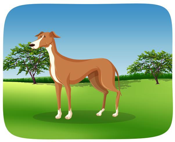 Ein Windhundhund auf Naturrahmen