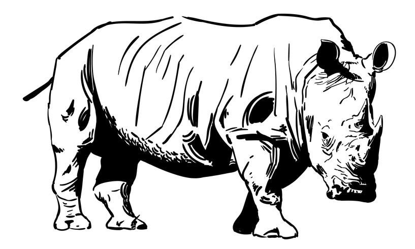 rhino rhinoceros vector eps