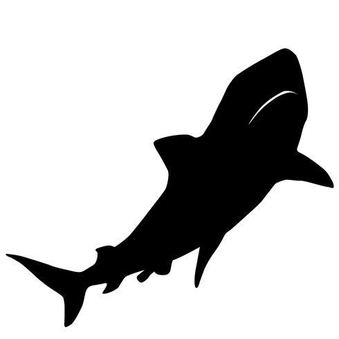 sharks vector eps
