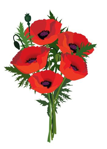 Quadro floral do ramalhete da papoila da flor. Fundo de cartão de verão