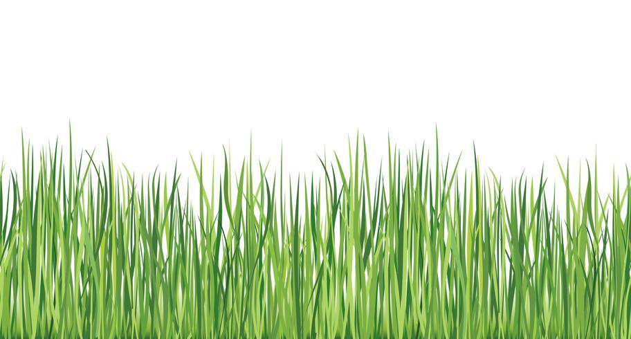 Bordure transparente d'herbe Fond extérieur de l'été Nature skyline