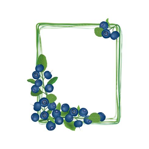 Blueberry branch frame. Berry floral background. Summer food decor