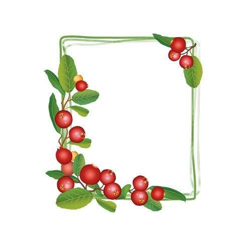 Cranberry zomerframe. Berry achtergrond. Floral natuurvoeding patroon