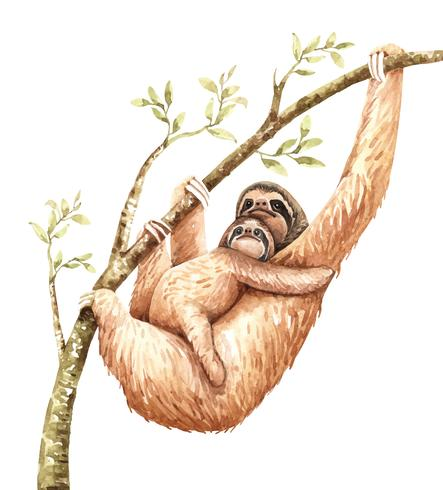 Watercolor sloth and baby hang on branch.