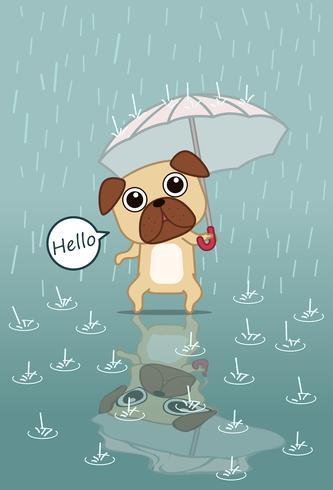 De hond houdt paraplu.