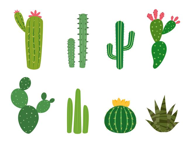 Cactus collections vector set isolated on white background