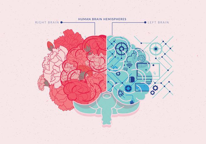 menselijke hersenen hemisferen vol 4 vector