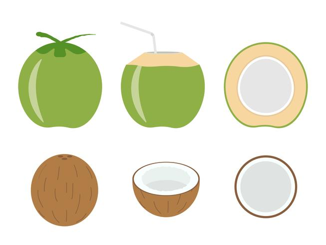Vector illustration of set fresh coconut isolated on white background