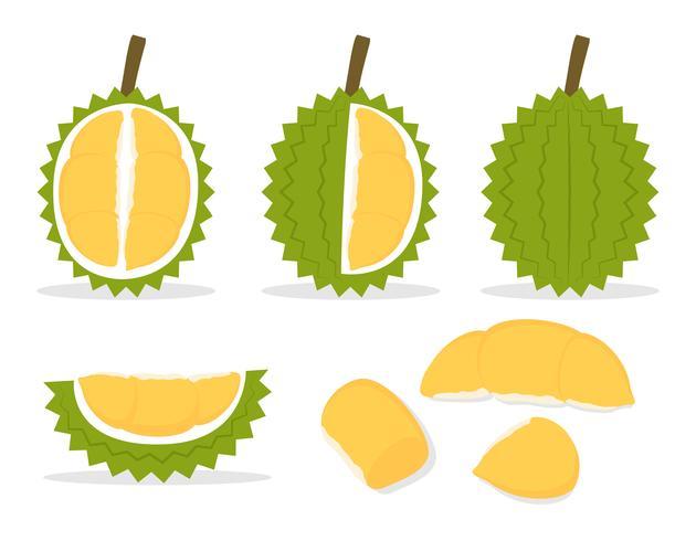 Vector illustration of set fresh durian isolated on white background