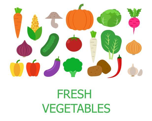 Set van verse biologische groenten - vectorillustratie