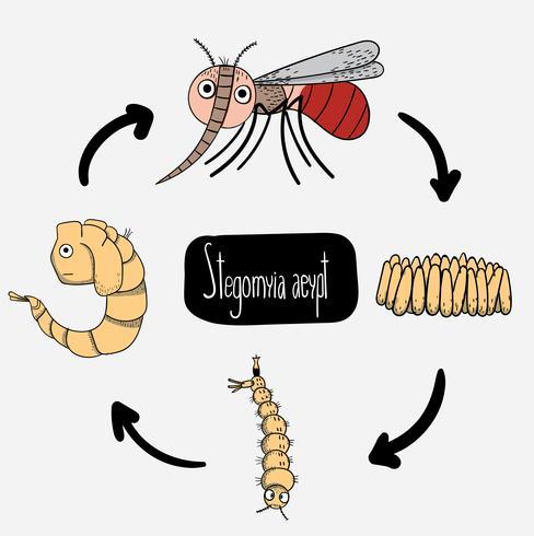 Estudo de caso bonito do estilo dos desenhos animados do ciclo de vida dos mosquitos.
