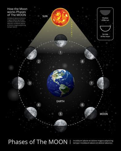 Movimientos de las fases lunares Ilustración vectorial realista vector