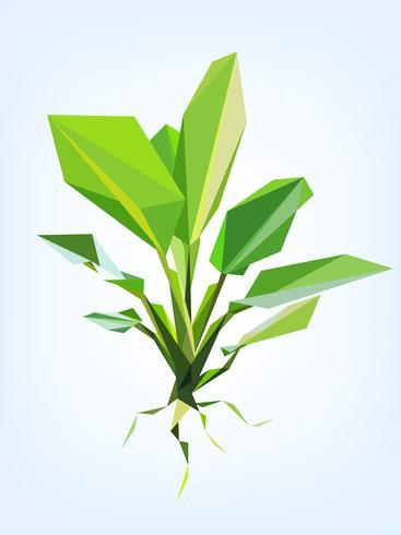 Polygonvektor Dieffenbachiabaum